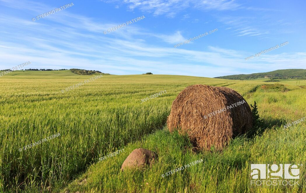 Stock Photo: The landscape of Val d'Orcia, Tuscany, Italy.