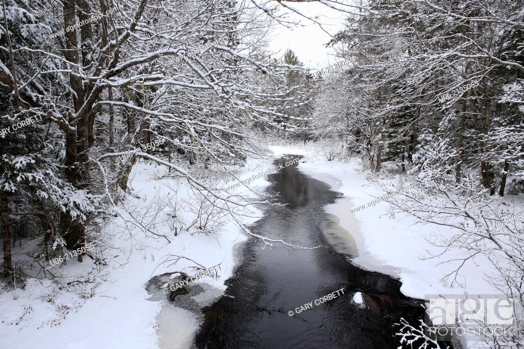 Stock Photo: A brook with snow and ice on the trees in the winter season in Canada.