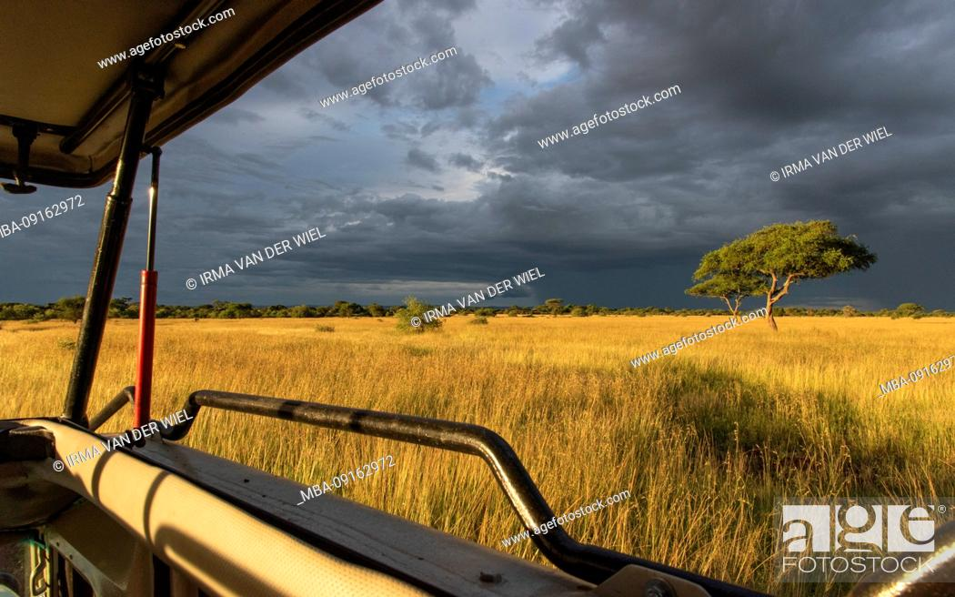 Stock Photo: Tanzania, Northern Tanzania, Serengeti National Park, Ngorongoro Crater, Tarangire, Arusha and Lake Manyara, Jeep safari in thunderstorm mood.