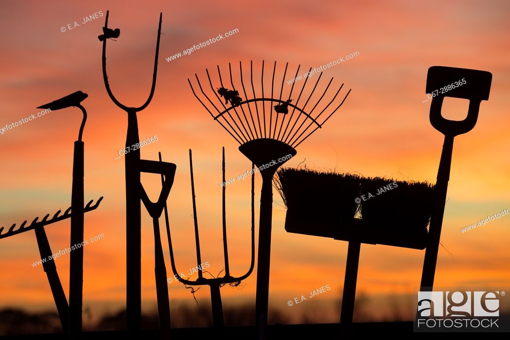 Stock Photo: Garden tools at sunset in winter.