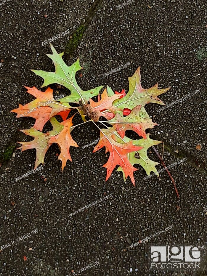 Stock Photo: Colored autumn leaves lying on sidewalk.
