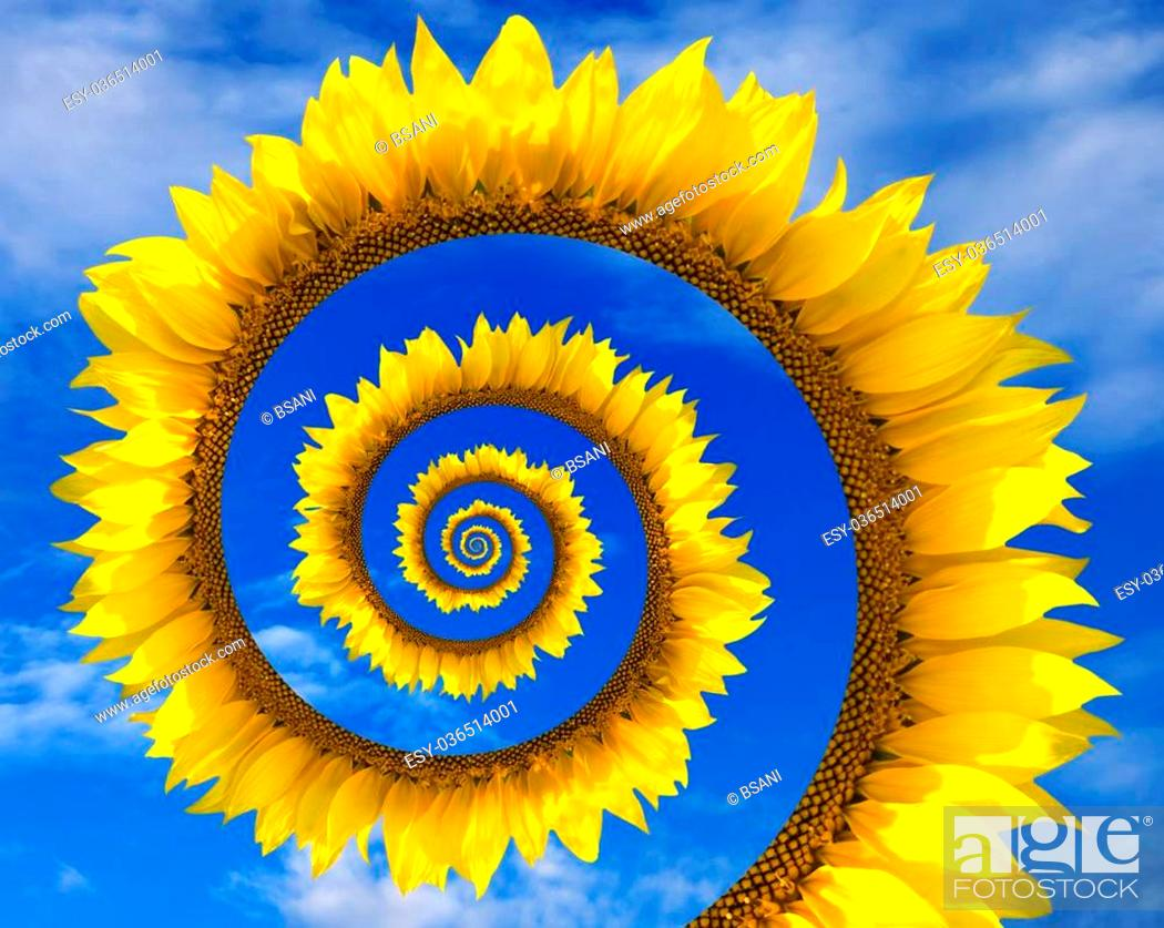 Stock Photo: Abstract sunflower spiral and blue sunny sky with clouds.