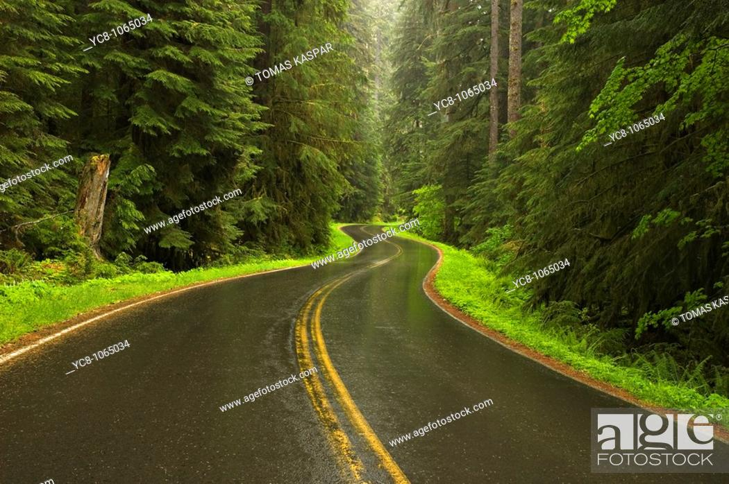 Stock Photo: Road in spring rainforest.