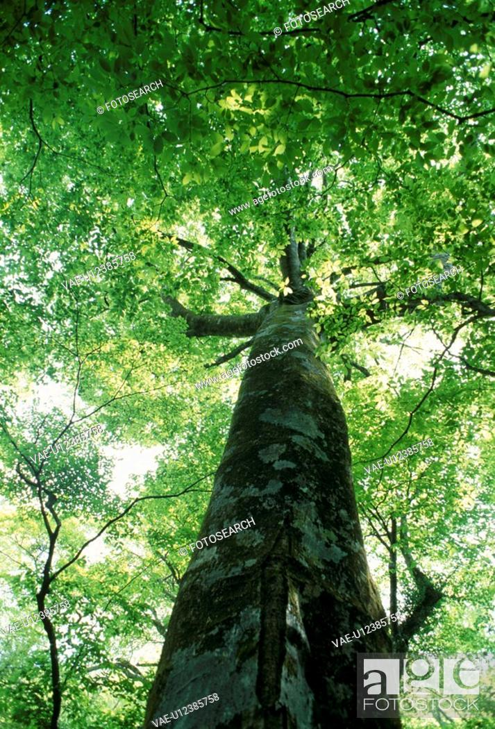 Stock Photo: A Big Tree.