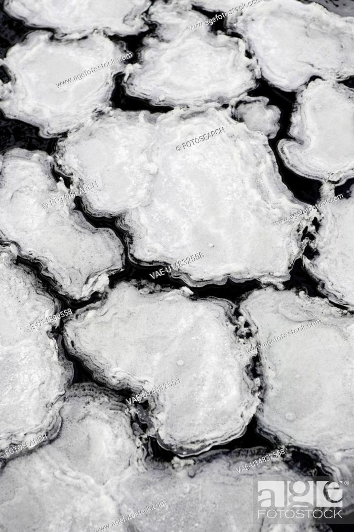 Stock Photo: Black And White, Close-Up, Floating, Floating On Water, Frozen, Full Frame.