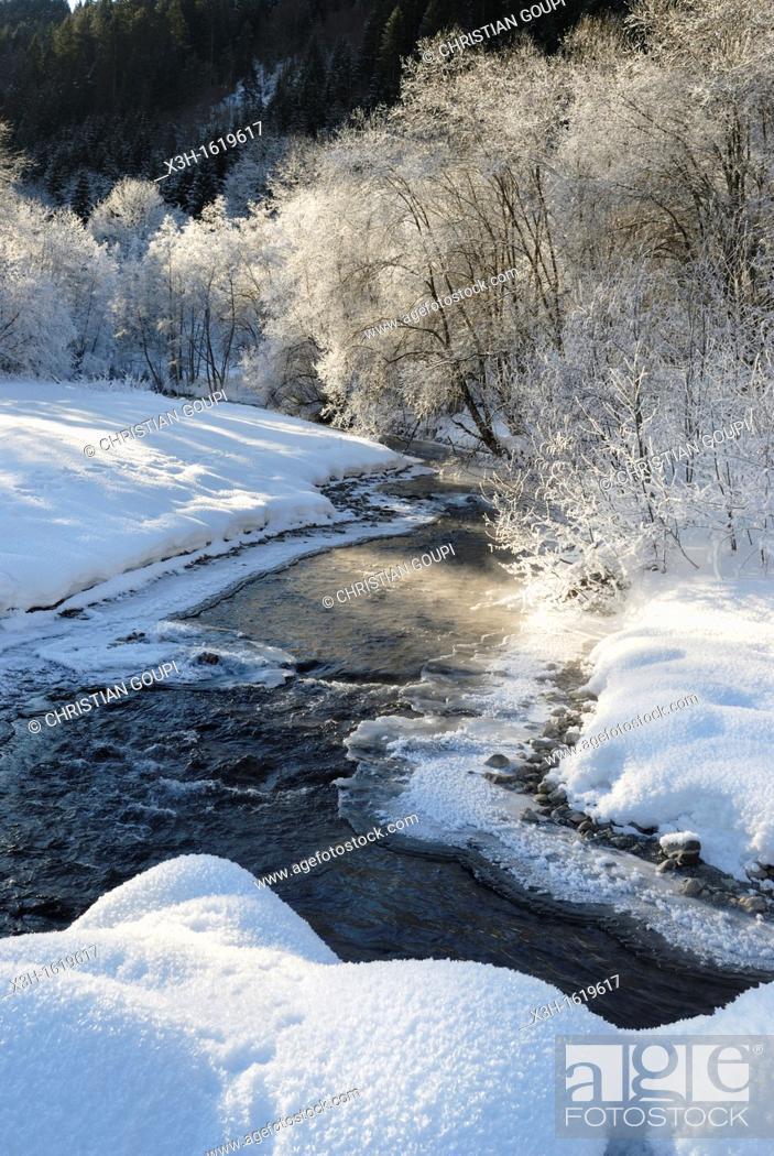 Stock Photo: frost over the Dranse d'Abondance river, Haute-Savoie department, Rhone-Alpes region, France, Europe.