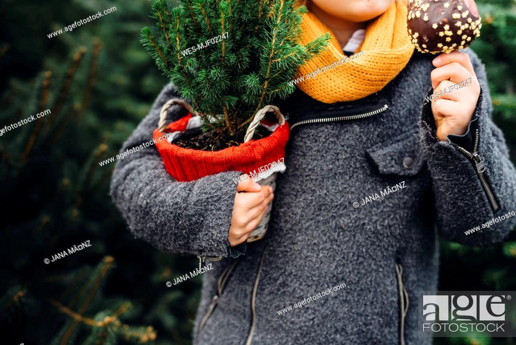 Stock Photo: Happy boy preparing for Christmas , holding potted tree, eating chocolate dipped apple.