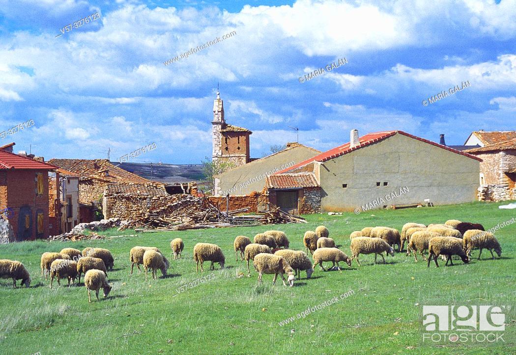 Stock Photo: Flock of sheep and village. Sierra de Ayllon, Segovia province, Castilla Leon, Spain.