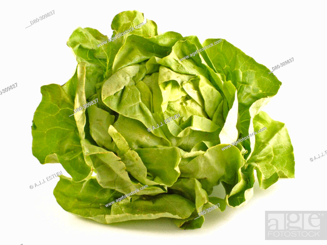 Stock Photo: Lettuce.