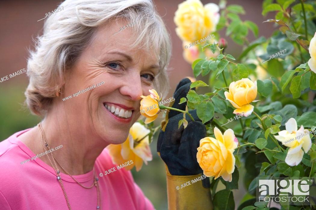 Stock Photo: Senior woman tending rose bush, smiling, portrait.