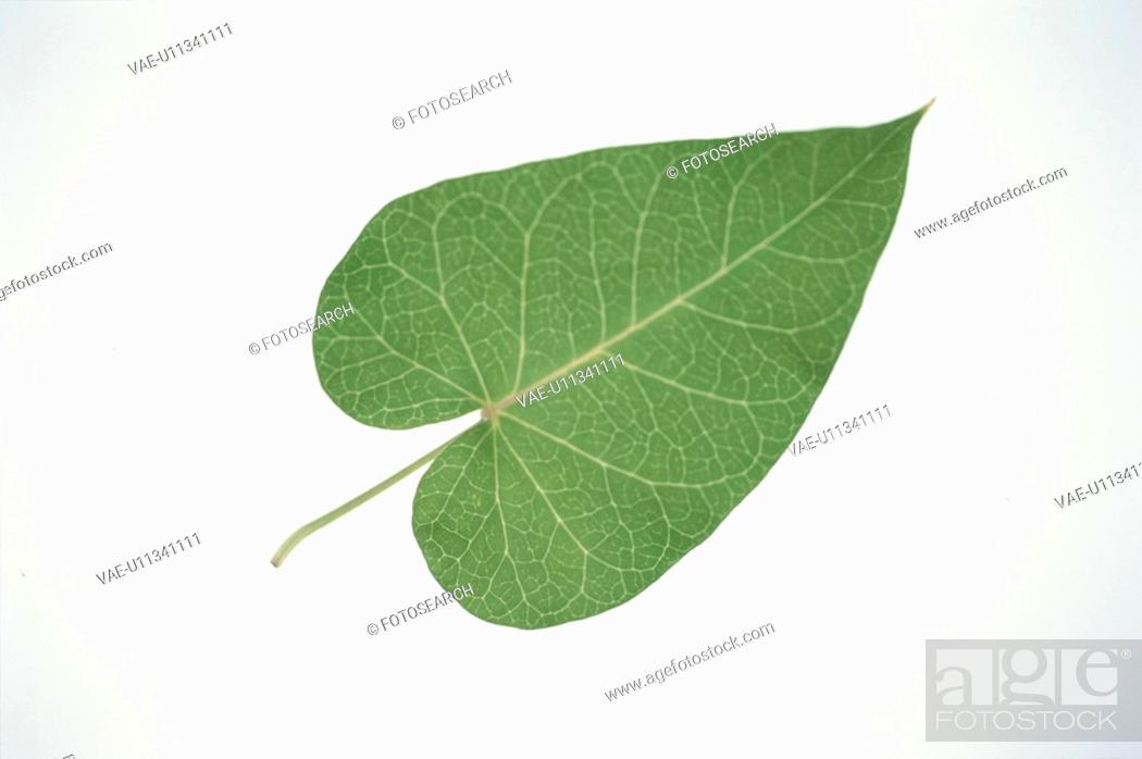 Stock Photo: Leaf.