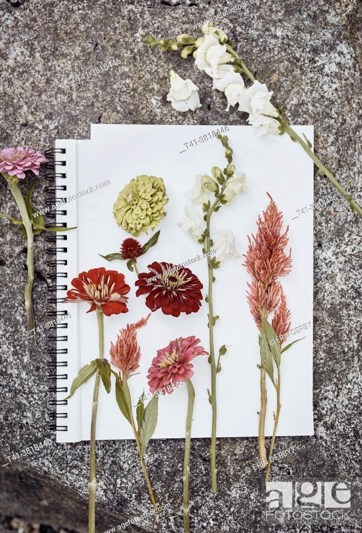 Stock Photo: Some wild flower cuttings on a white paper on a rock.