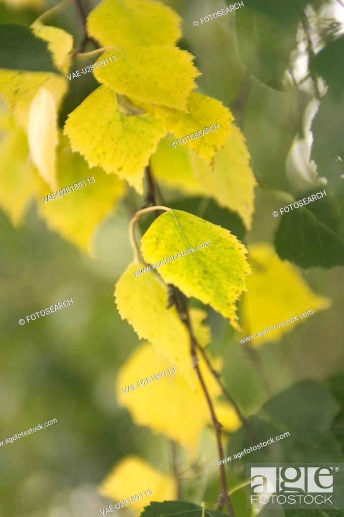 Stock Photo: Calm, Close-Up, Day, Flora, Foliage.