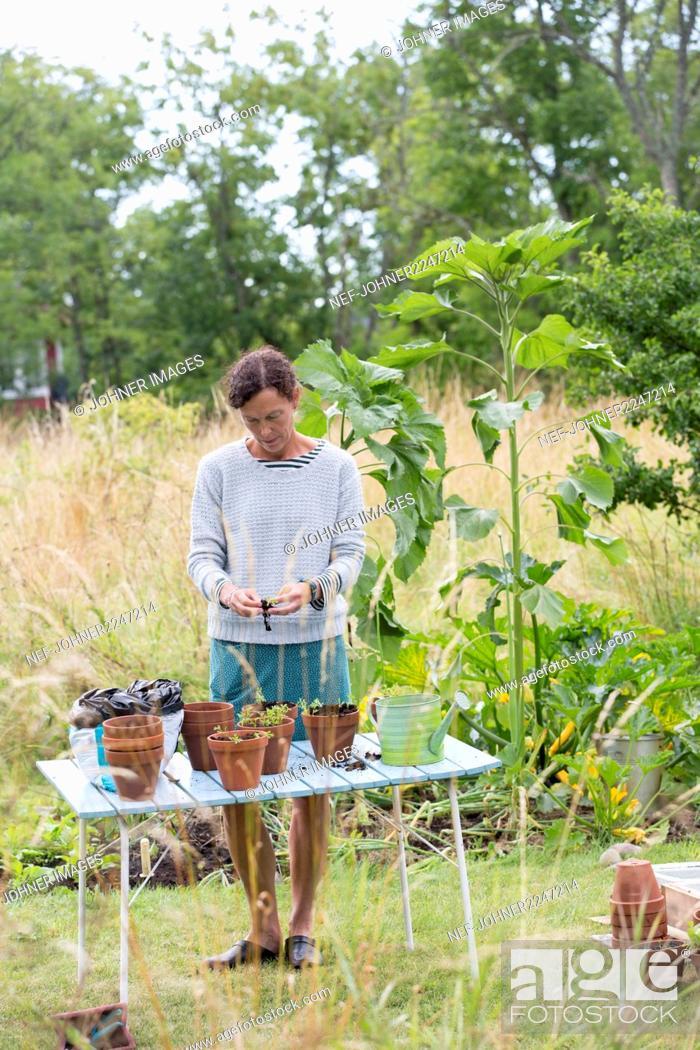 Imagen: Woman planting plants in pots.
