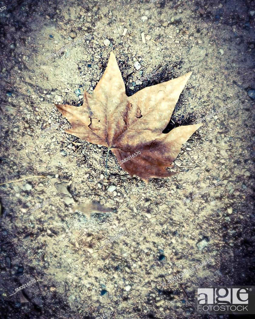 Stock Photo: dried leaf on the ground on runnig trail in cordoba.
