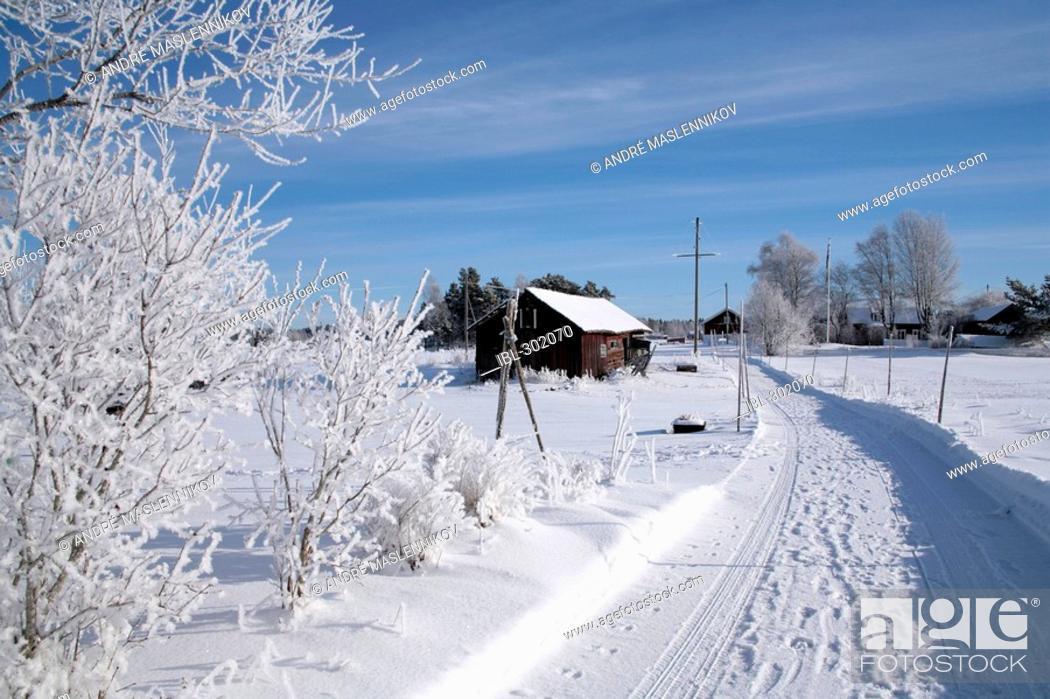 Stock Photo: Winterland.