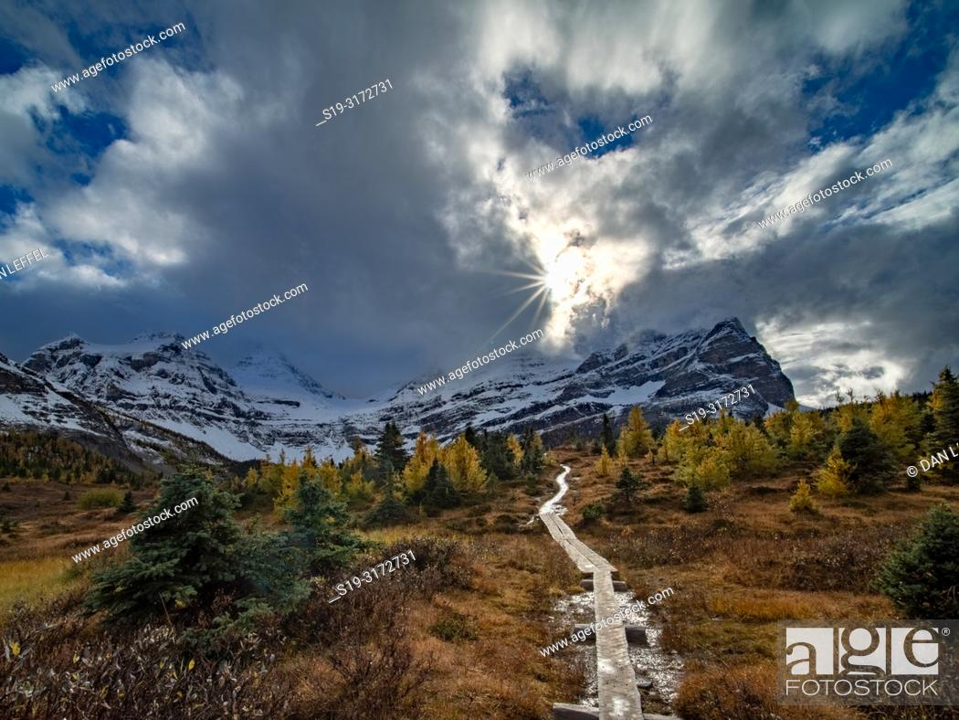 Imagen: Canadian Rockies. Assiniboine Provincial Park. Fall Color Trail.