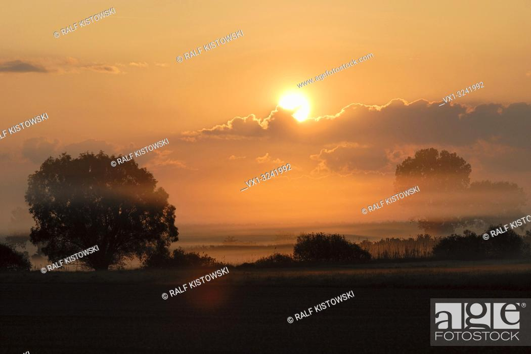 Imagen: Sunrise above wet meadows and lines of trees and bushes, rural countryside, sun shining on morning mist, morning mood full of atmosphere.