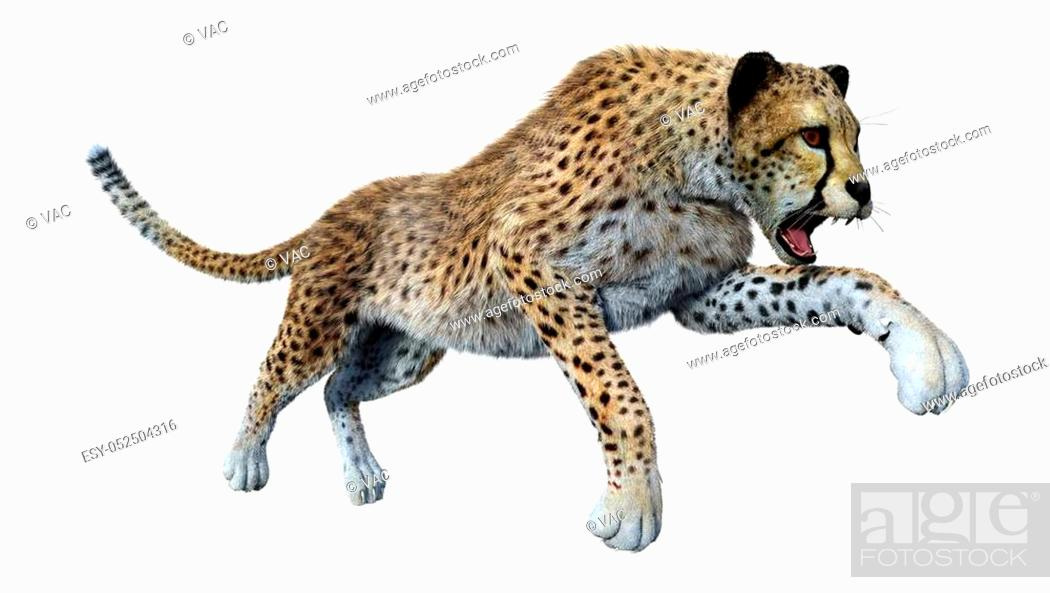 Stock Photo: 3D rendering of a big cat cheetah isolated on white background.