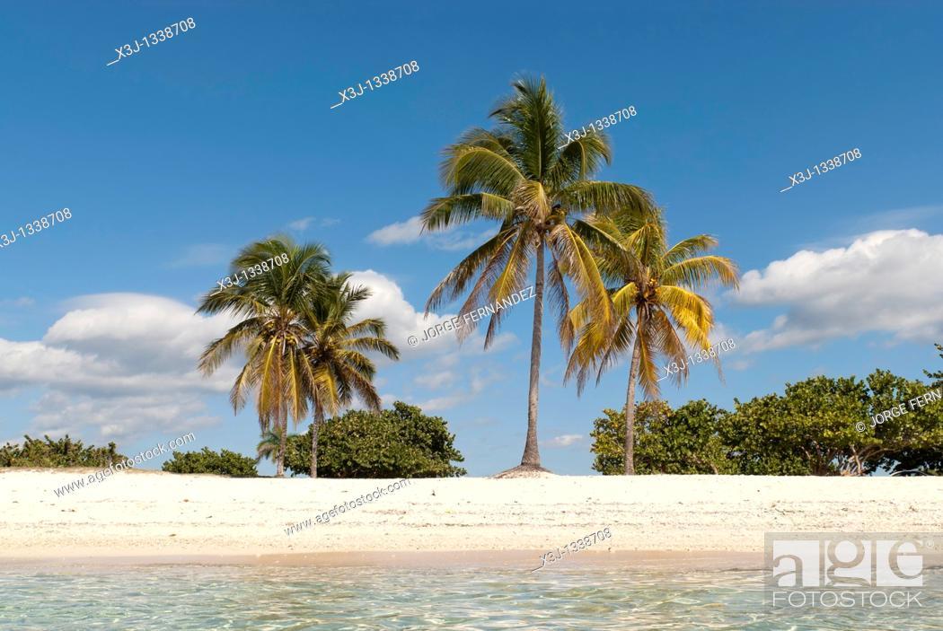 Stock Photo: Playa Giron  Caribbean beach with palm trees and white sand, Cuba, Caribbean.