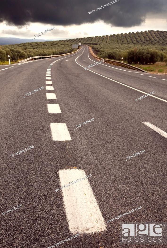 Stock Photo: White lines of road and olive trees, Cordoba, Andalucia, Spain.