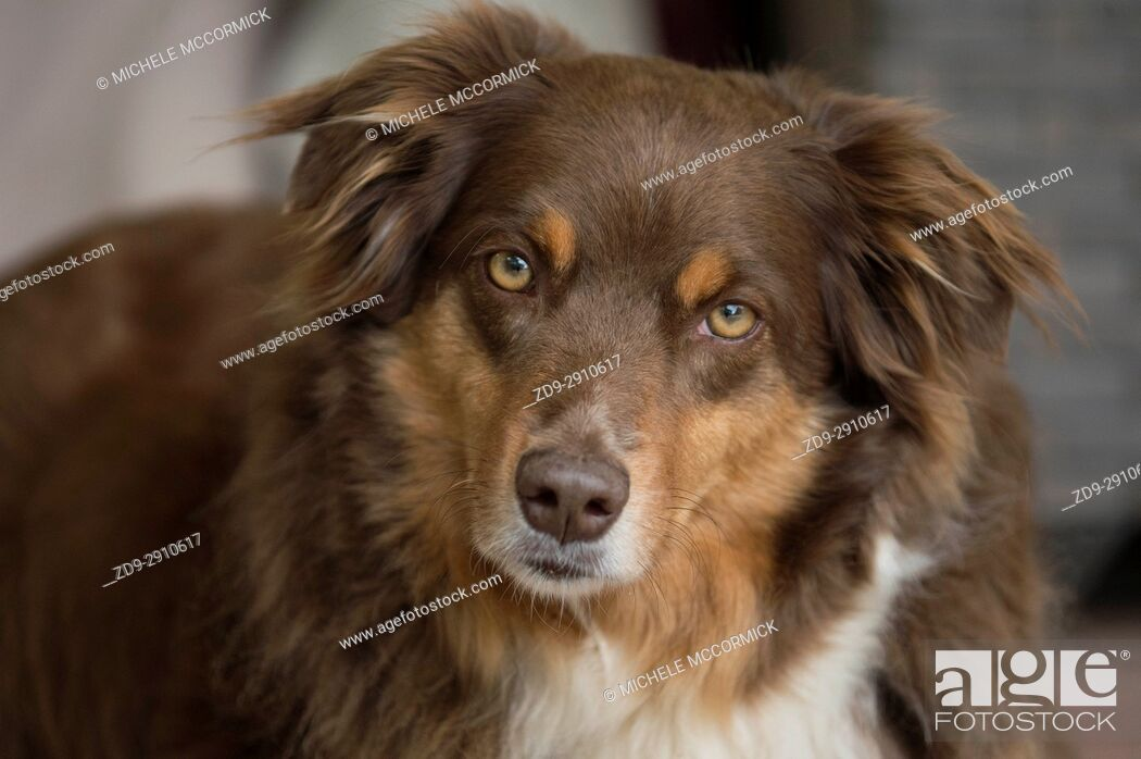 Stock Photo: A dog gazes knowingly at her owner.
