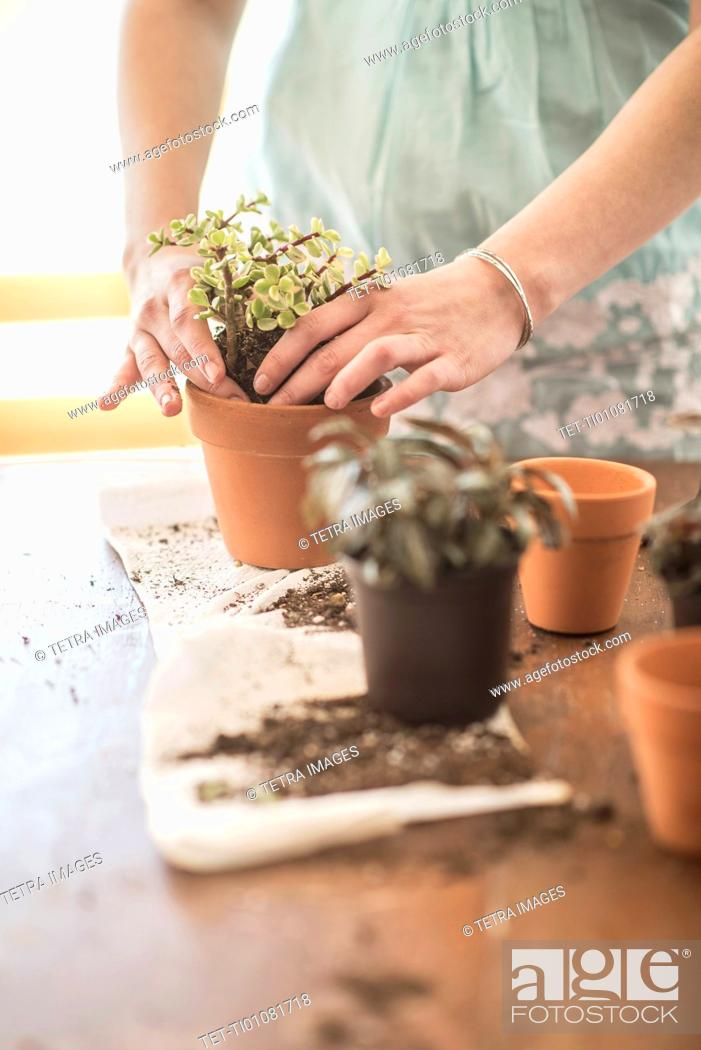 Stock Photo: Woman repotting flowers.