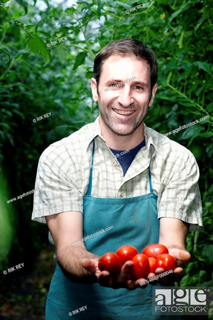 Stock Photo: Germany, Bavaria, Munich, Mature man holding tomatoes in greenhouse.