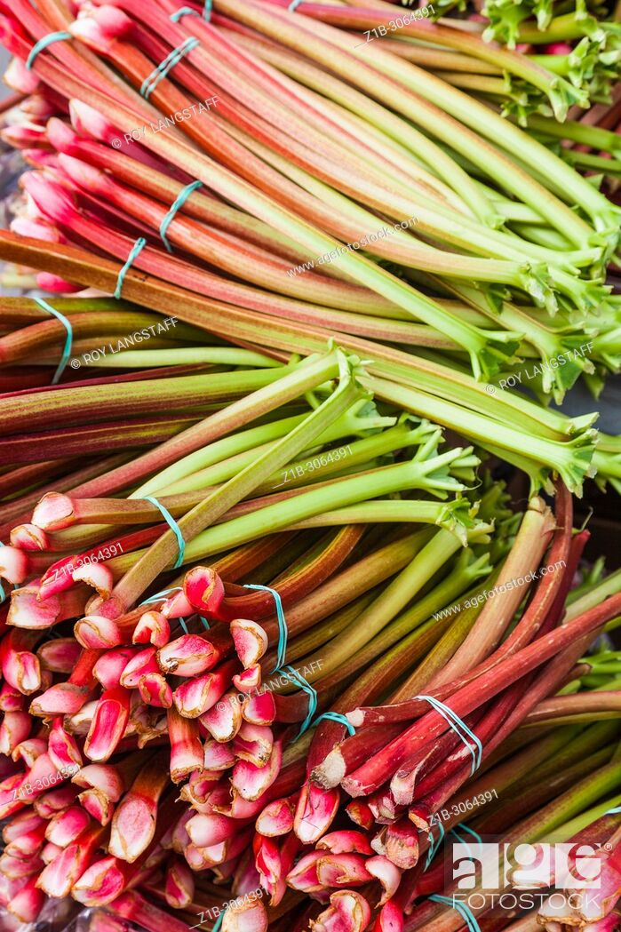 Stock Photo: Bundles of Rhubarb for sale at the Steveston weekend farmers market near Vancouver, British Columbia.