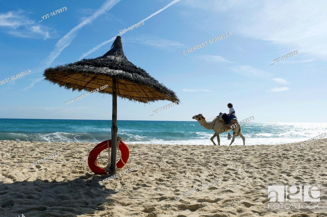 Stock Photo: North Africa, Tunisia, Cape Bon, Hammamet. Camel for tourists walking on the beach.