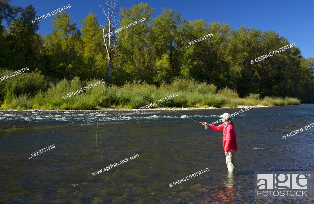Stock Photo: Flyfishing on the North Santiam River, Riverside Park, Stayton, Oregon.