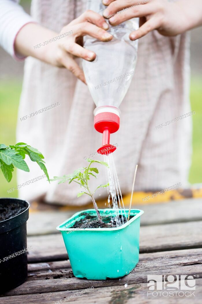 Stock Photo: Girl watering seedling.