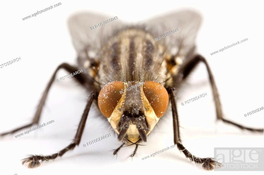 Stock Photo: Close-up of a fly.