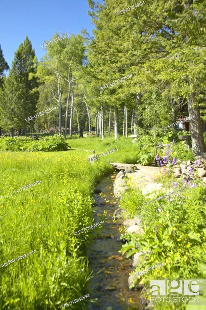 Stock Photo: Creek runs through spring foliage, Centennial Valley.