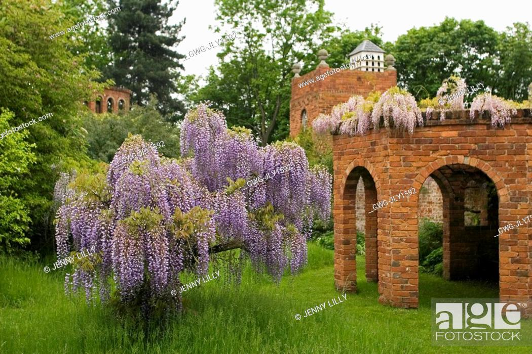Wisteria and follies at stone house cottage garden kidderminster stock photo wisteria and follies at stone house cottage garden kidderminster workwithnaturefo