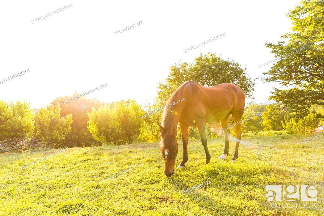 Stock Photo: Horse grazing in field landscape.