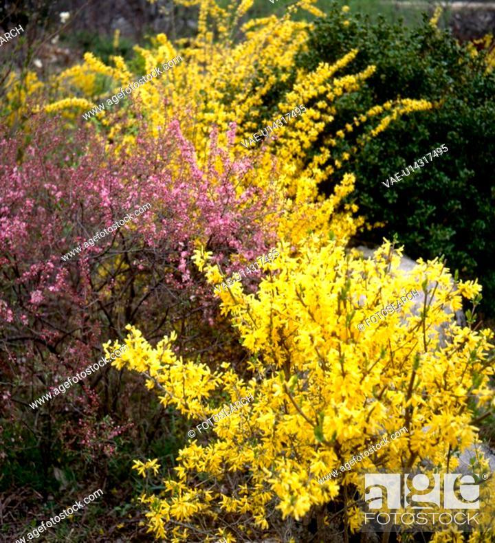Stock Photo: flower, landscape, spring, season, scene, yellow flower, nature.