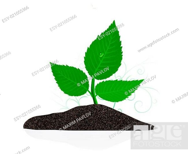 Stock Photo: Young plant on the white backgrounds.
