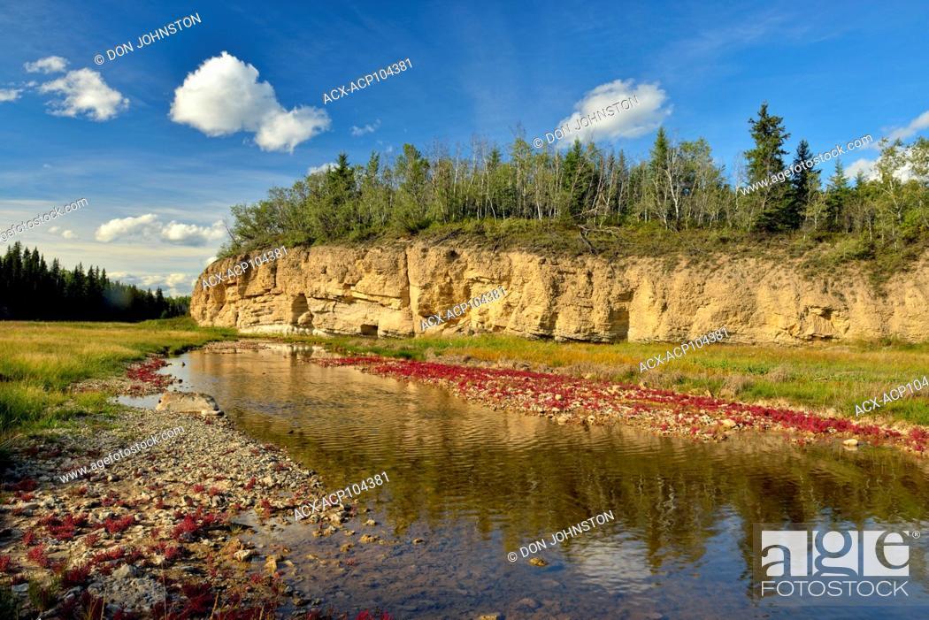 Stock Photo: Salt tolerant vegetation (Red samphire) growing along the shore of the Salt River, Wood Buffalo National Park, Alberta, Canada.