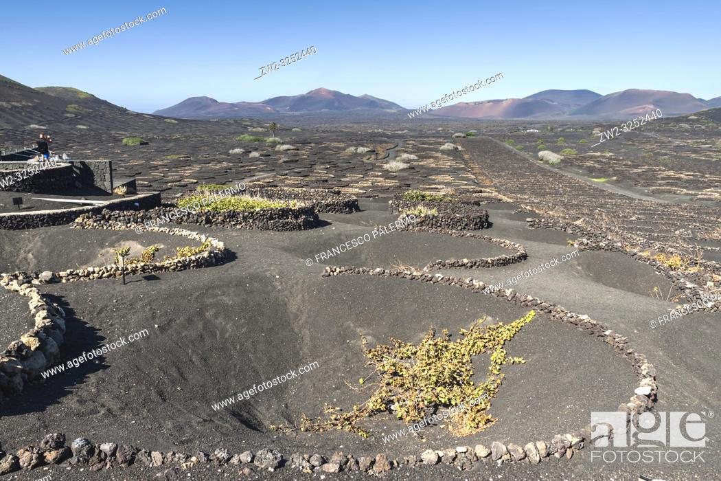 Stock Photo: The typical Malvasia of the volcanic island. La Geria, Lanzarote. Spain.