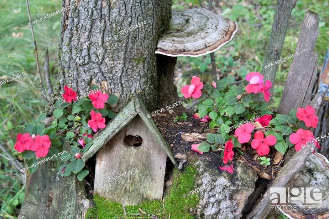 Stock Photo Birdhouse Nestled Into Tree Stump Surrounded By Moss Pink Impatiens And Large Fungi Growths Herall Minnesota Mn Usa