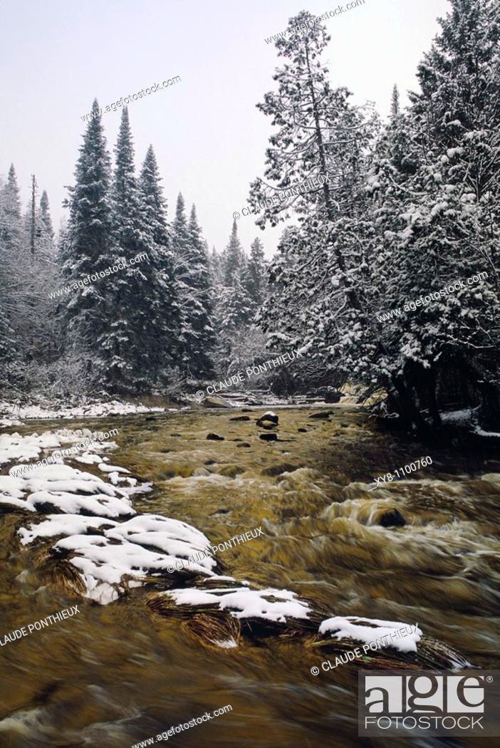 Stock Photo: Stream-and-Forest, Québec, Canada.