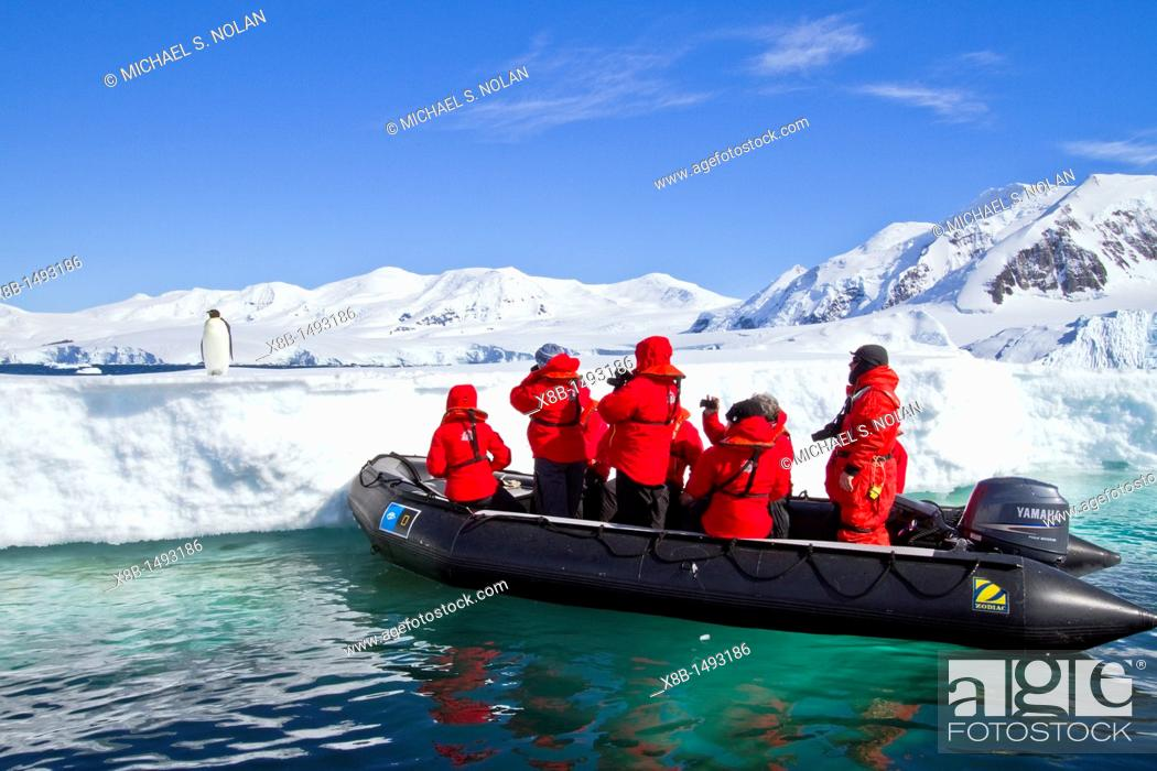 Imagen: Lindblad Expeditions guests with a lone adult emperor penguin Aptenodytes forsteri on sea ice in the Gullet between Adelaide Island and the Antarctic Peninsula.