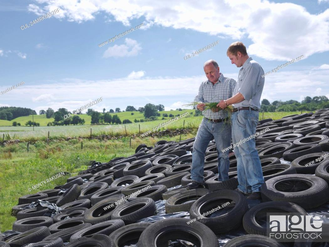 Stock Photo: Farmers inspect grass on silage clamp.