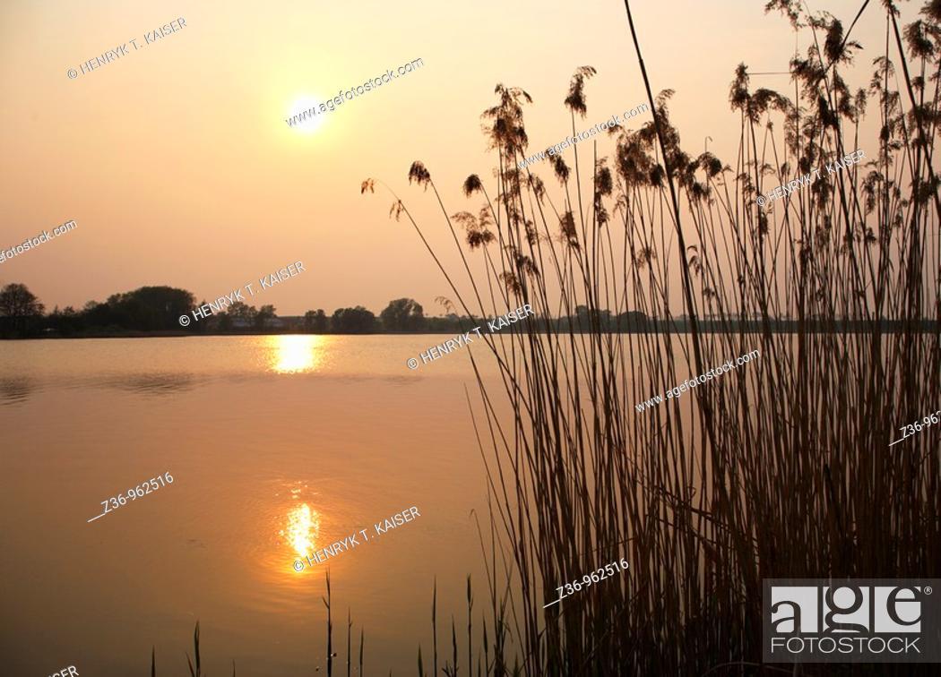 Stock Photo: Sunset dry grass, Poland.