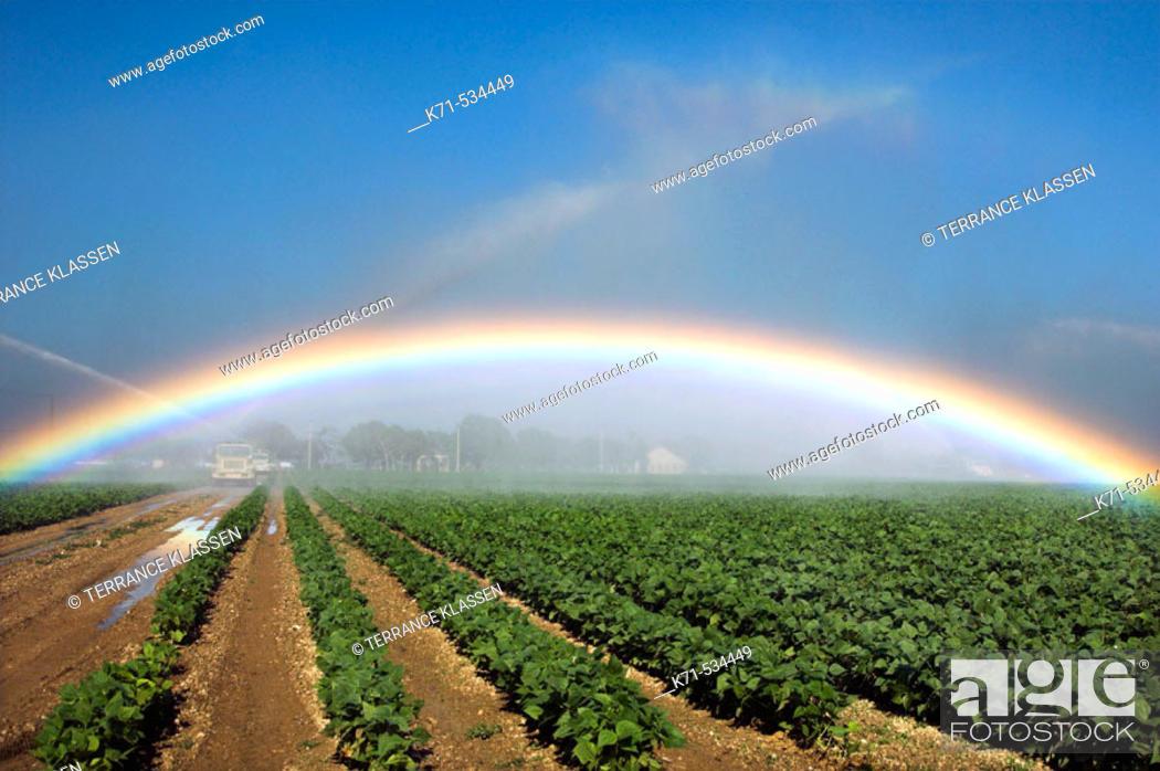 Stock Photo: Fields of beans (lentils) under irrigation producing a rainbow near Homestead, Florida, USA.