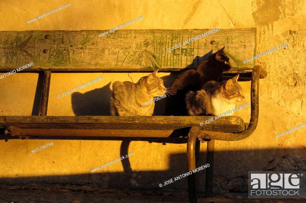 Stock Photo: Cats at san Miguel quarter. Cuenca (World Heritage). Castilla-La Mancha. Spain.