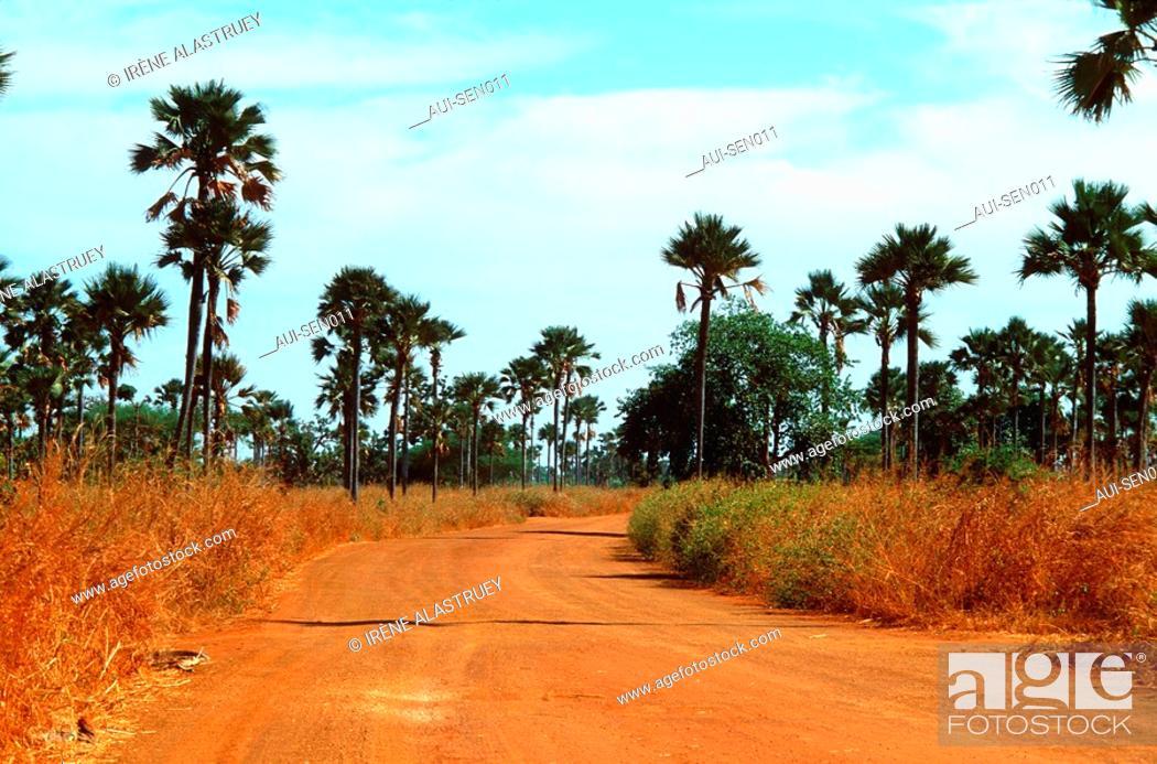 Stock Photo: Senegal - La Petite Cote - Region Joal-Fadiouth.