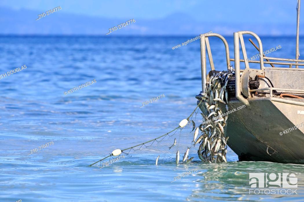 Stock Photo: Herring fishery near Nanaimo, Vancouver Island, British Columbia.