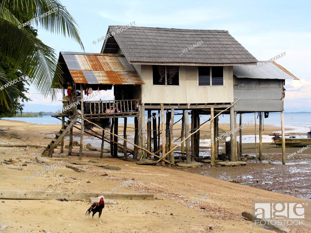 Stock Photo   Rooster And House On Stilts Low Water Ban Batu Fishing  Village Ko Libong Island Thailand